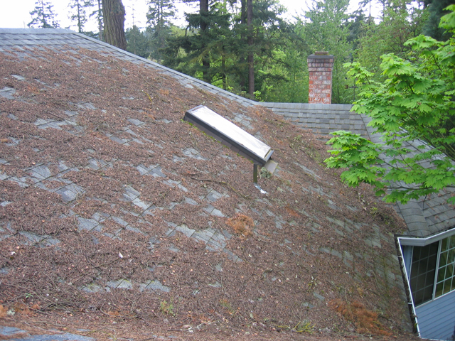"roof debris - ""Clean Your Roof!"""